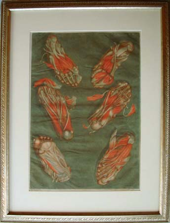"""Plate 14 (feet) from """"Corps complet d'anatomie."""" Matted and framed. Arnauld Eloi Gautier d'Agoty."""