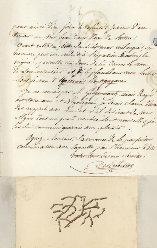 Autograph letter signed to Pierre Hippolyte Boutigny, accompanied by watercolor sketch of an alga. Louis Alphonse Brebisson.