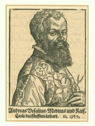 Woodcut portrait of Vesalius attributed to Tobias Stimmer (1539-84). Matted. 13x9. cm. Andreas Vesalius.