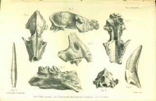 Palaeontological memoirs and notes of the late Hugh Falconer. Hugh Falconer