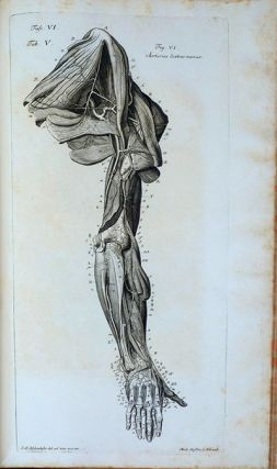 Iconum anatomicarum. HFN copy
